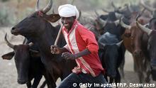 Tschad Guite Vieh-Hirte mit Kühen
