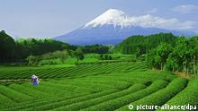 Tourismus in Japan nach Fukushima Berg Fuji in Honshu