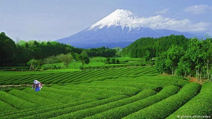 Tourismus in Japan nach Fukushima Berg Fuji in Honshu (picture-alliance/dpa)