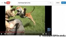 Youtube Indien Tigerangriff