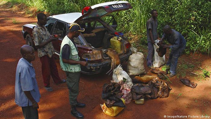 Kongo National Park Inspektion Fahrzeug Ladung Bushmeat