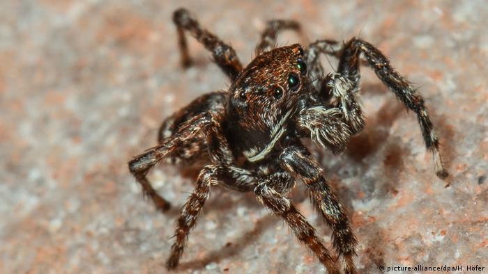 Aranha no parque nacional da Floresta Negra