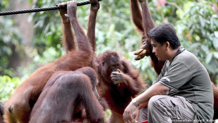 Reserva de orangotangos na Malásia