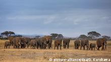 Kenia Amboseli National Park Elefantenherde