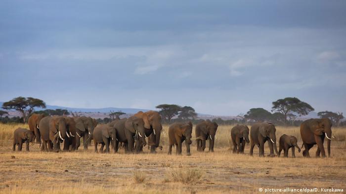 Parque de elefantes no Quênia