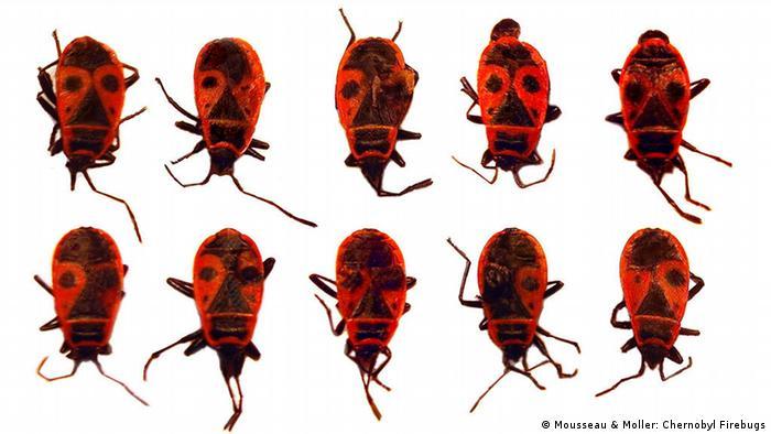 Studie Timothy Mousseau Biologische Effekte von Nuklearkatastophen Firebugs
