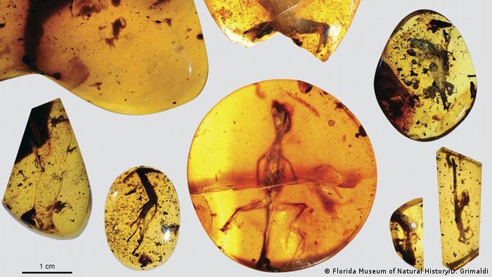 Fósseis répteis em âmbar revelam segredos da evolução