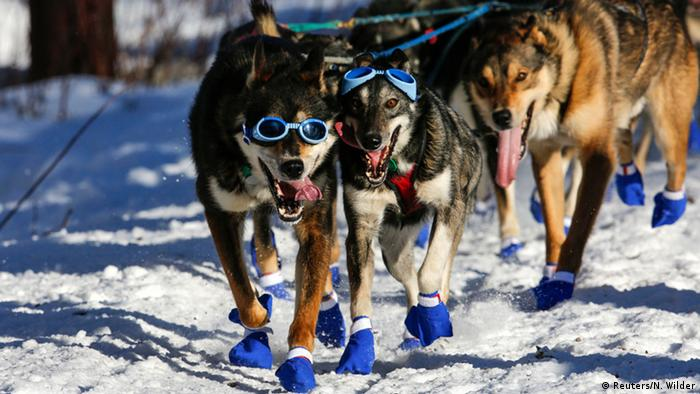 Alaska Iditarod Trail Sled Dog Race (Reuters/N. Wilder)