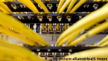 Symbolbild Netzwerk - Netzwerkkabel in einem Serverraum