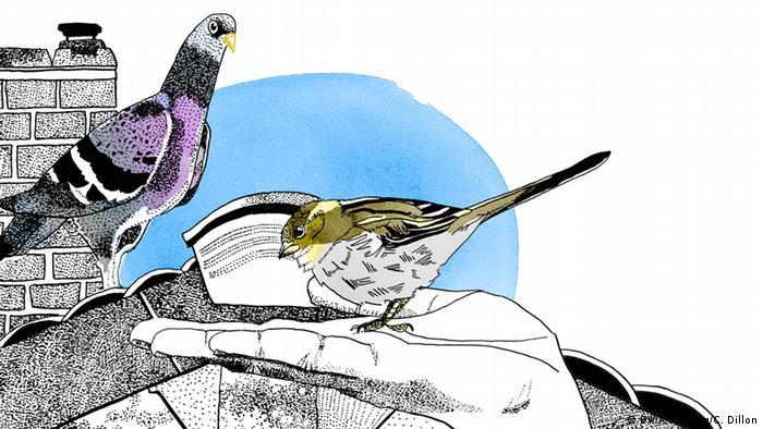 Lieber den Spatz in der Hand als die Taube auf dem Dach, Illustration, Copyright: DW / A. Herzog / C. Dillon