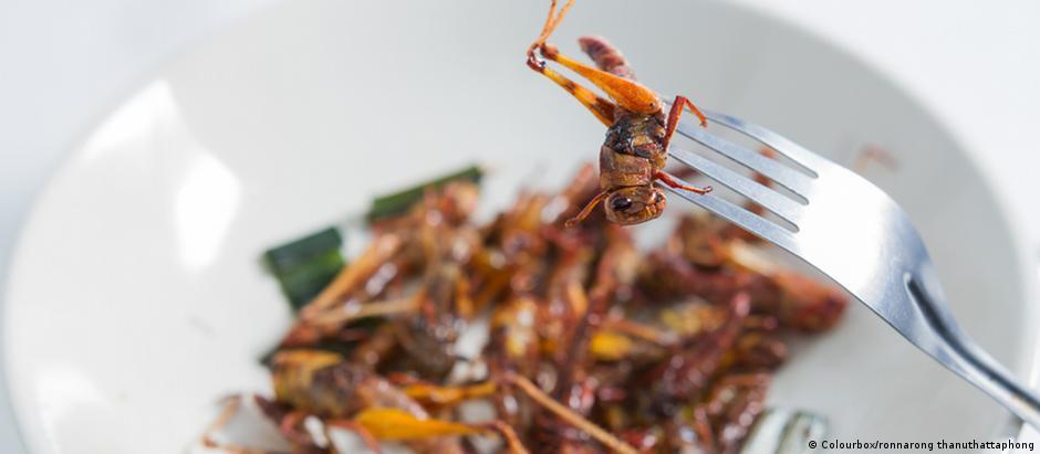 Επάγγελμα: εκτροφέας εντόμων!