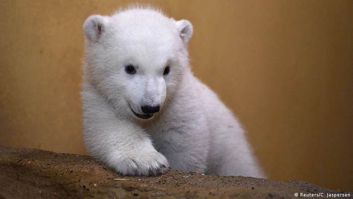 Deutschland Eisbärnachwuchs Zoo Bremerhaven