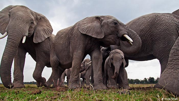 Governments falling down on ivory trade commitments