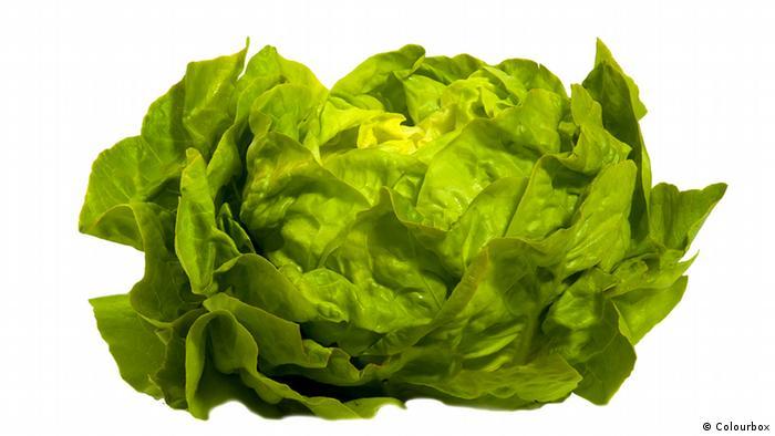 Frischer grüner Salat (Colourbox)