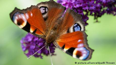 Butterfly on a flower (Picture: picture-alliance/dpa/B.Thissen)