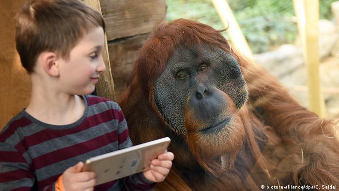 Junge und Orang-Utan Foto: picture-alliance/dpa/C. Seidel