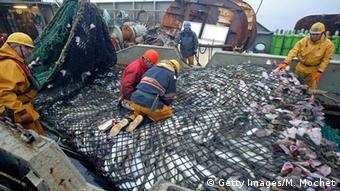 Arktis Barentssee Französischer Fischtrawler mit fangfrischem Fisch