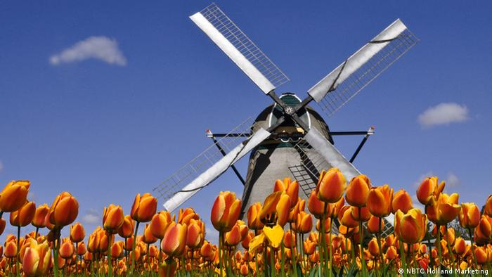 Tulips and windmill in Holland (NBTC Holland Marketing)