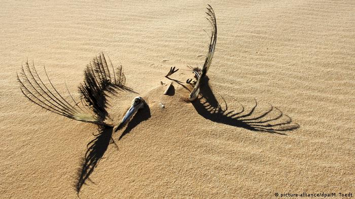 Stork skeleton in Egypt (Photo: picture-alliance/dpa/M. Toedt)