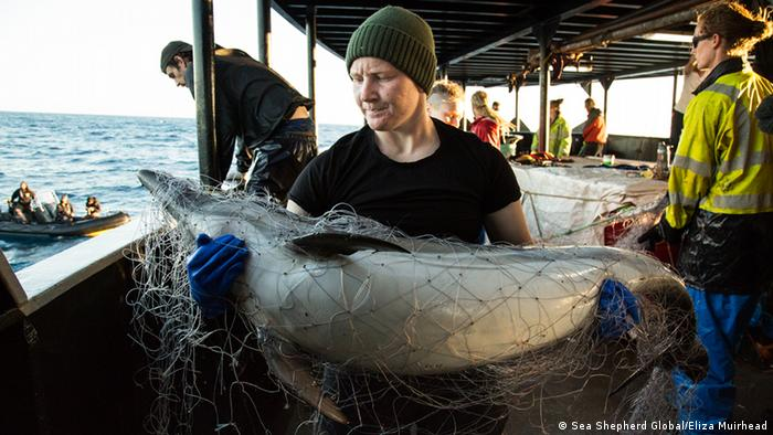 Sea Shepherd crew holds a dead common dolphin (Picture:Sea Shepherd Global/Eliza Muirhead)