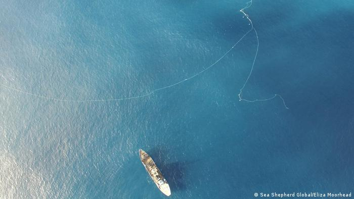 Aerial picture of a vessel near a long illegal driftnet (Picture: Sea Shepherd Global/Eliza Moorhead)