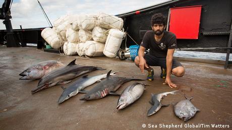 Captain Siddharth Chakravarty with dead marine animals (Picture: Sea Shepherd Global/Tim Watters)
