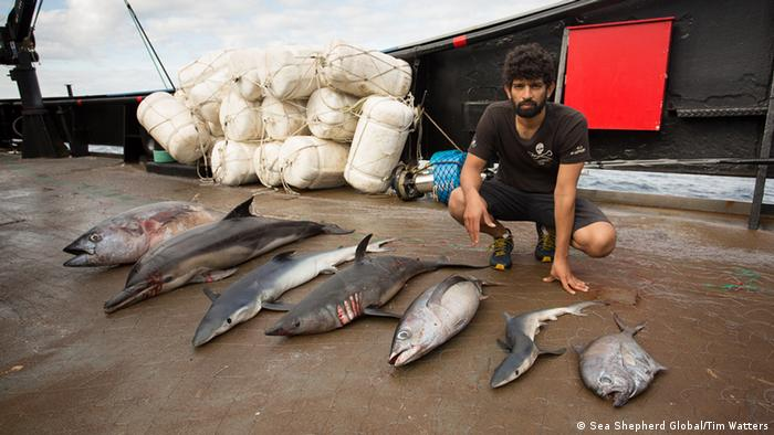 Captain Siddharth Chakravarty with dead marine animals (Picture: Sea Shepherd Global/Tim Watters)
