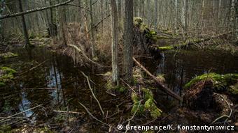 Участок засохшего леса