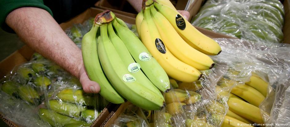 Υπό εξαφάνιση οι μπανάνες;