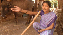 17.03.2016 DW Global 3000 Wohnzimmer Velas Indien