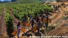 Libanon Weinanbau