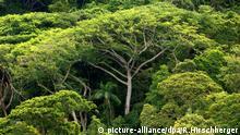 Atlantischer Regenwald