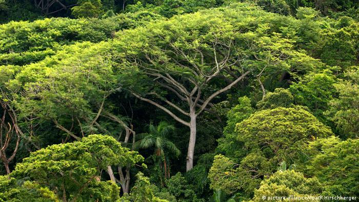 La Agonía De Los Bosques Del Mundo Ciencia Y Ecología Dw