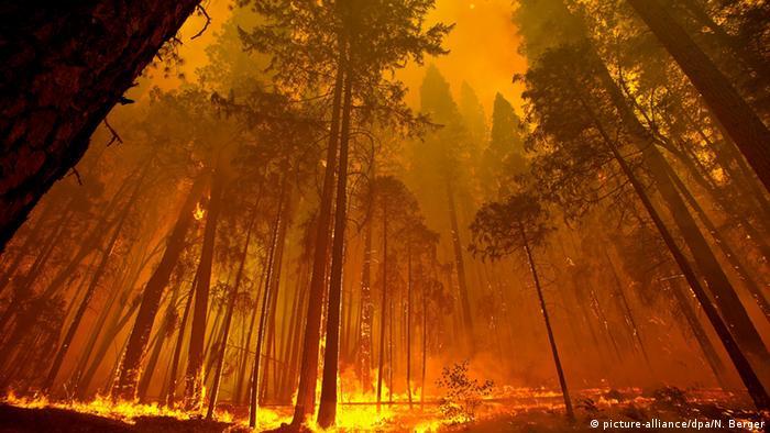 Waldbrand Kalifornien USA