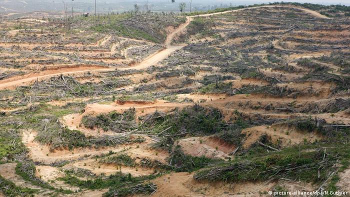 gerodete Wälder in Richtung Bukit auf der indonesischen Insel Sumatra (picture-alliance/dpa/N.Guthier)