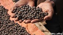 Милиони хора по света пият кафе ежедневно - и то често идва от Етиопия. След златото кафето е най-големият експортен шлагер на източноафриканската държава. Пресните зърна се опаковат в чували по 60 кг, от които годишно Етиопия изнася по над 140 милиона. Който иска да установи откъде точно идва кафето, трябва да предприеме едно малко пътешествие.