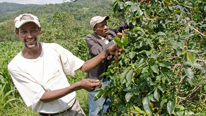 Äthiopien: Kaffee-Bauer (Foto: James Jeffrey/DW)