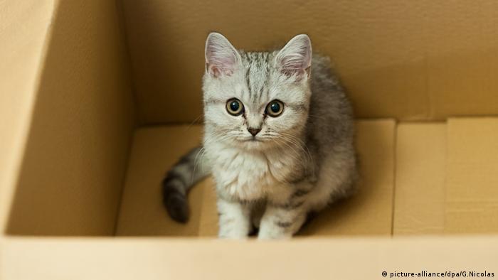 نتيجة بحث الصور عن قطط