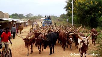 De nombreux éleveurs tels que les Banyamulenge de l'Est du Congo ou les Tutsi du Rwanda et du Burundi conduisent leur bétail vers l'Ouganda en quête de pâturage