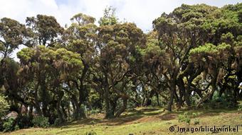 Äthiopien Wald