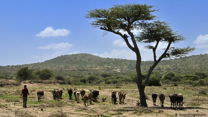 O El Niño tem afetado severamente várias zonas do continente africano. Na foto uma região da Etiópia.
