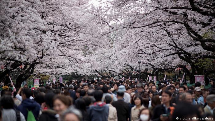 Japan Jahreszeiten Kirschblüten (picture alliance/abaca)