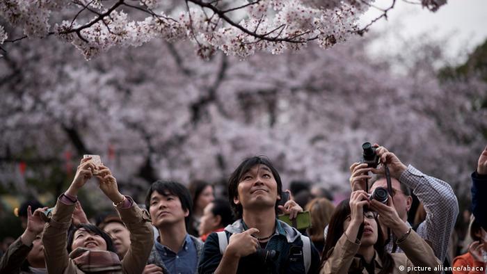 Japan Jahreszeiten Kirschblüten