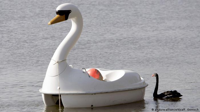 Ein schwarzer Schwan folgt einem Tretboot in Form eines Schwans (picture-alliance/dpa/F. Gentsch)