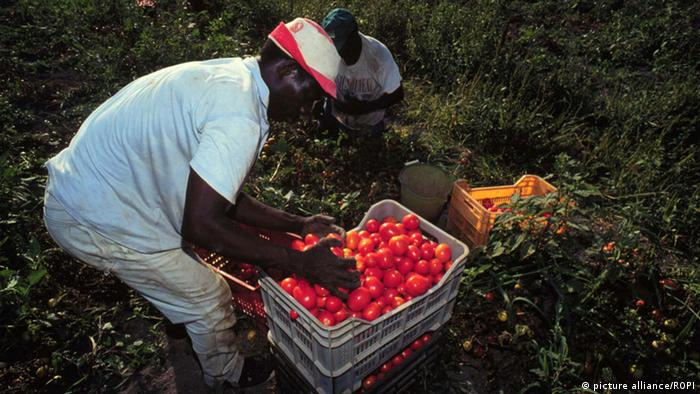 Apulia, pomidory (picture alliance/ROPI)