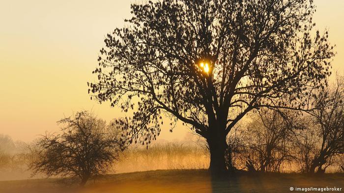 Árbol en un campo al amanecer (imago/imagebroker).