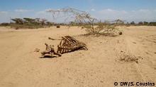 Äthiopien Fentale Skelett von Vieh an Straße