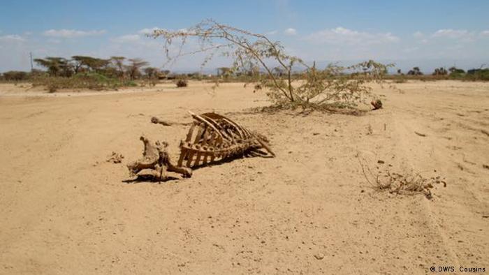 animal skeletons in desert copyright: Sophie Cousins