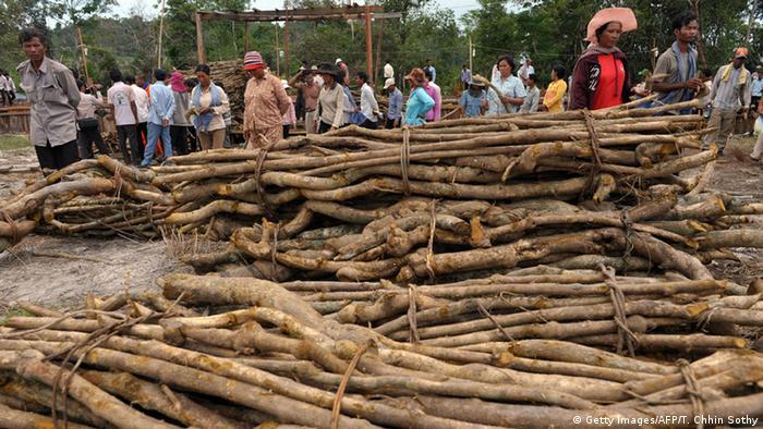 سوداگری با درختان جنگل