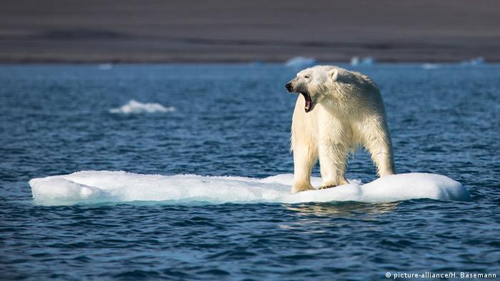 Eisbär auf kleinen Eisscholle (picture-alliance/H. Bäsemann)